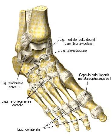 Поперечный сустав стопы мазь гель суставов колена