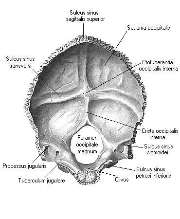 Sulcus sinus sigmoidei || Med-koM